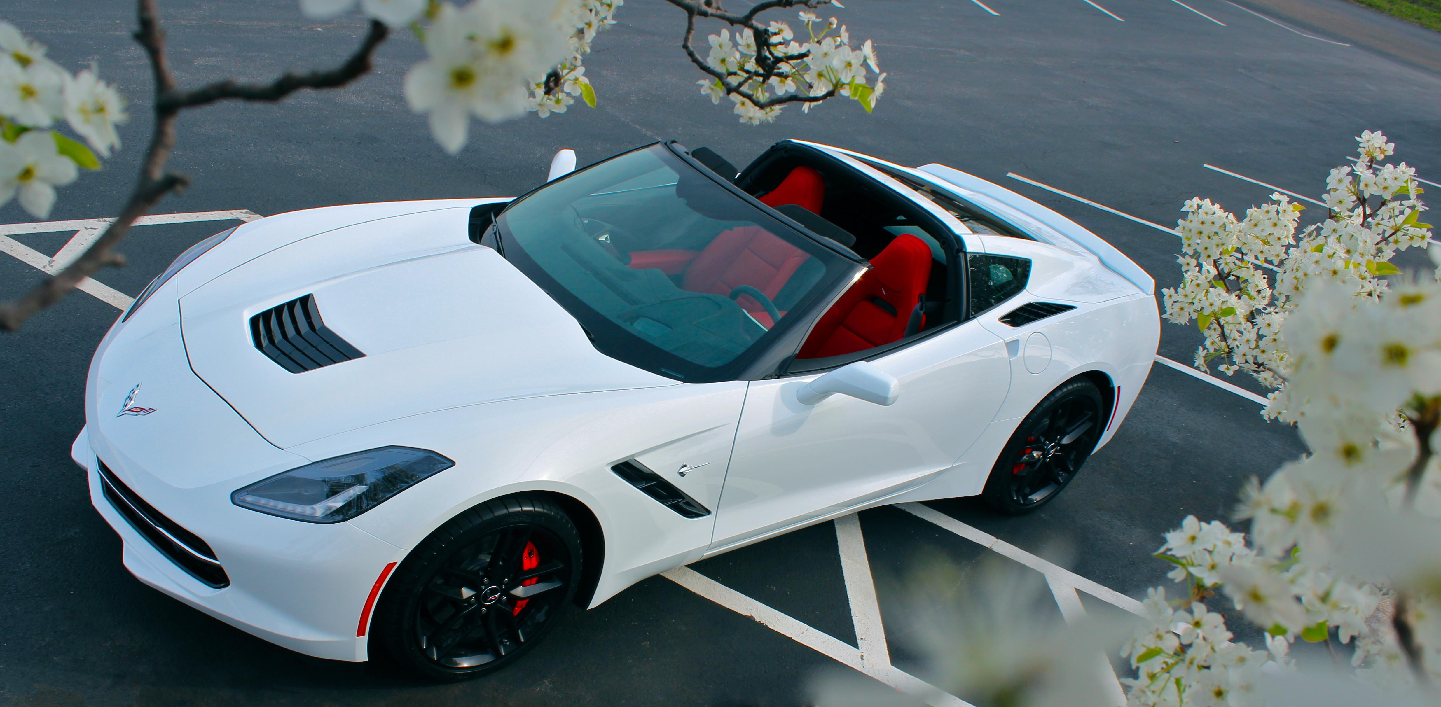 Name:  6414d1397782074-april-2014-stingray-month-contest-i-5jbjb8w.jpg