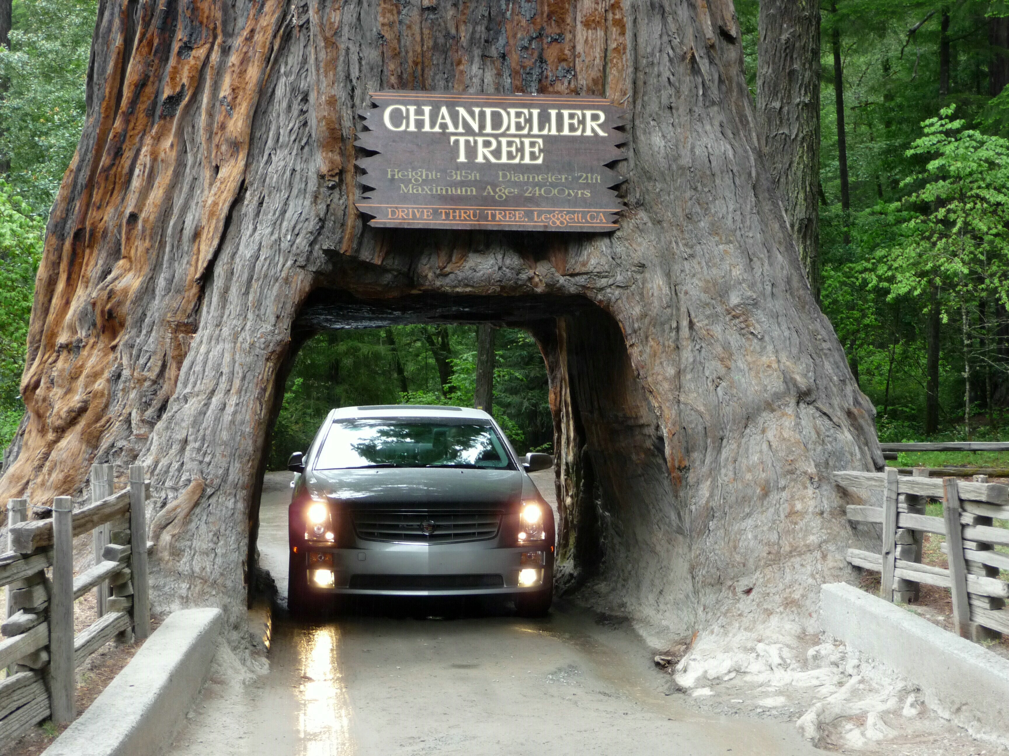 Storm Topples Iconic Sequoia \'Tunnel Tree\' in Northern California